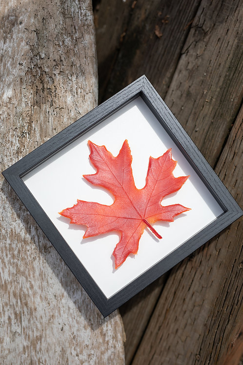 Glass Maple Leaf in Red