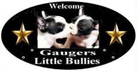 Gaugers Little Bullies logo 100.jpg