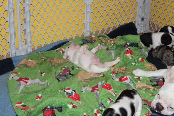 Bell puppies 2-27-2021 (1).JPG