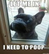 frenchie-i-need-to-poop-logo-2021.jpg