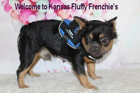 Kansas-fluffy-frenchies-logo-2021.jpg