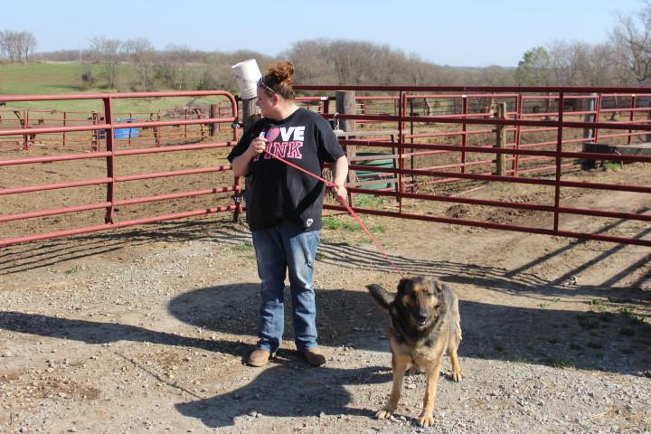 German_Shepherd_Puppies_For_Sale_lady_8_