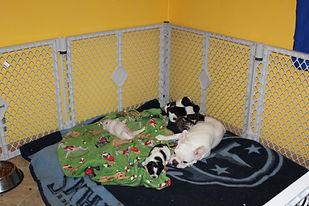 Bell puppies 2-27-2021 (3).JPG
