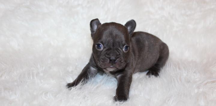Laura Puppy