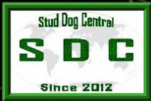 Stud-Dog-Central.jpg