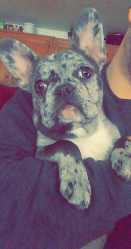puppy-buyer-4-4-2021-c.jpeg
