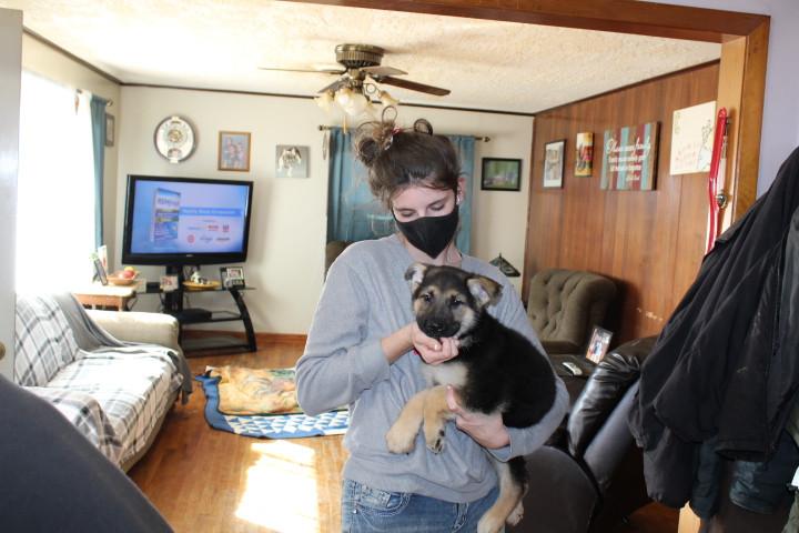 German Shepherd Puppy Buddy  buyer Jeann