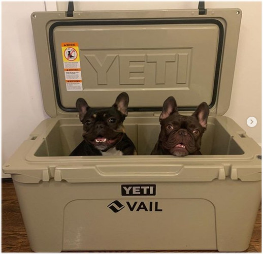 gaugers-little-bullies-2-frenchie-9-28-2