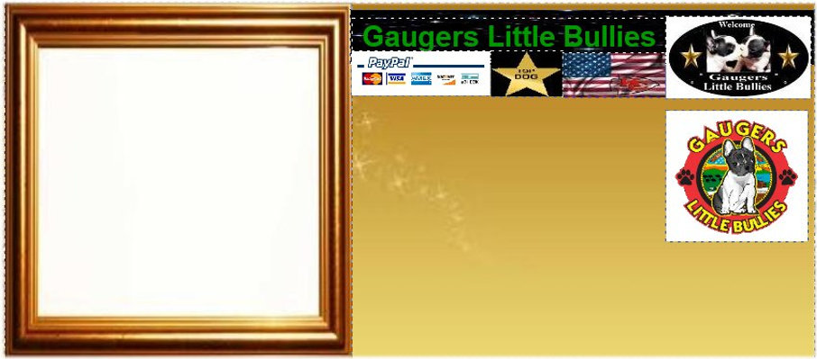 gaugers-little-bullies-template-2-2-2021
