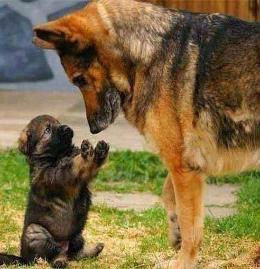 mom and puppy.jpg