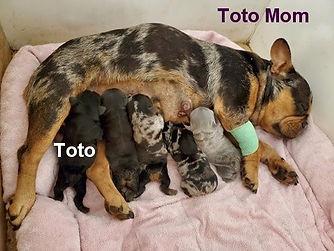 Toto-Mom.jpg