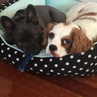 Puppy-Buyer-Valia-Gardne.jpeg