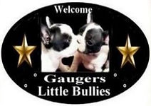 Gaugers-Little-Bullies-logo-2021_edited_