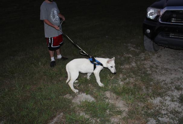 German Shepherd Puppy For Sale Near kansas city colby (6).JPG