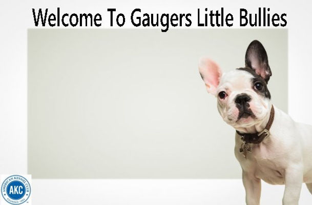 Gauger Little Bullies advertising french