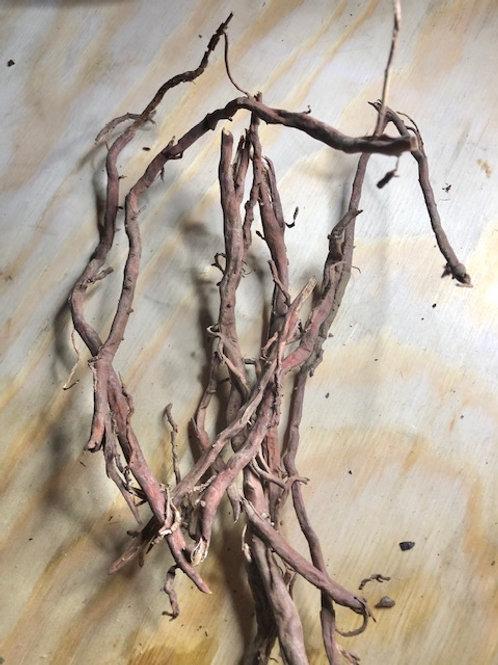 Coconut Root