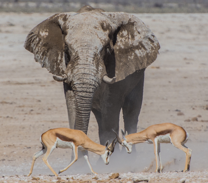 Elephants vs. gazelles. Where to spend your resources.