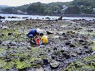 潮が引くと、カニ取りや貝取りなど磯遊びができます。