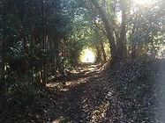 木々に囲まれた道。ここも意外と好き。物語に出てきそうな・・・ トンネルを抜けたら違う世界が待っていそうな・・・