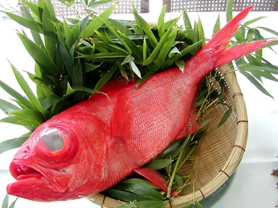 特産金目鯛