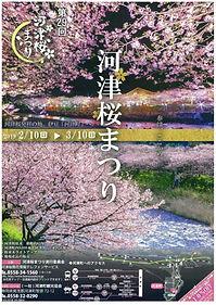 2019 河津桜祭り.jpg