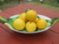 ニューサマーオレンジ ~伊豆 下田 おすすめお土産~