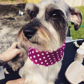 odalys-mobile-dog-grooming-miami