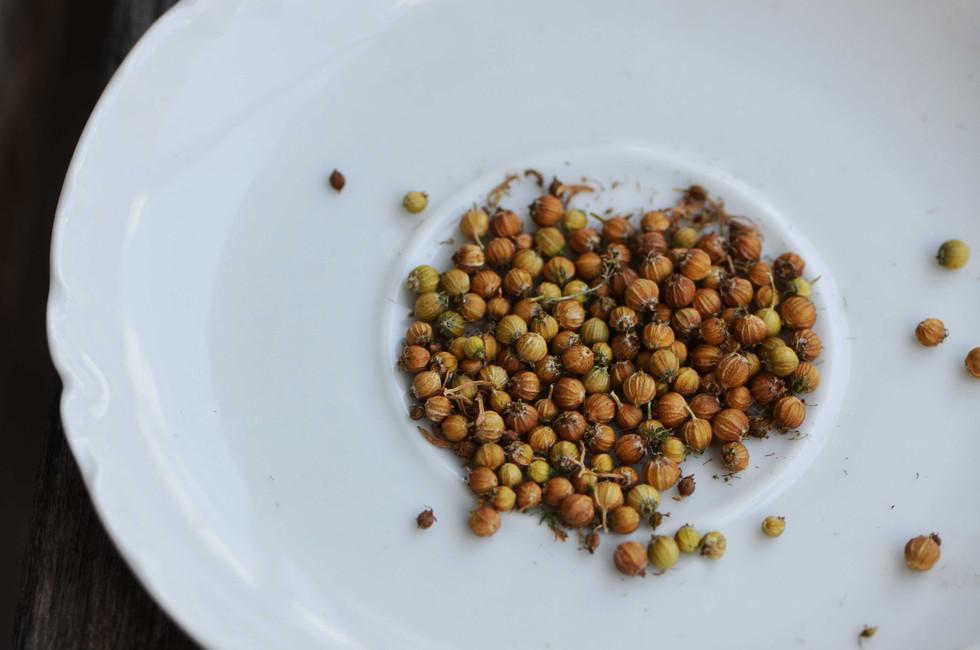 coriander+seeds+lr.jpg