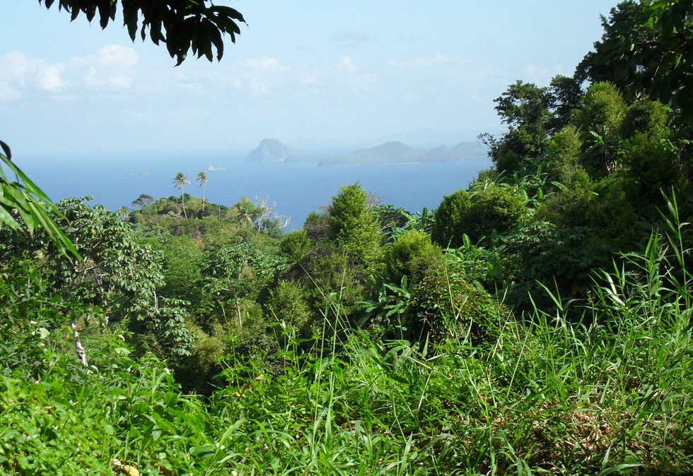 view from property for sale Ahoma st andrew grenada.JPG