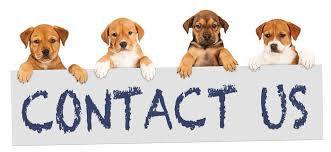 contact us dog.jpg