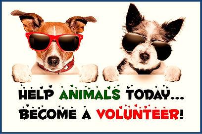 volunteer-slide-1_edited_edited.jpg