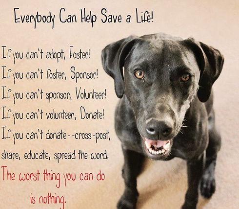 everyone can save a life.jpg