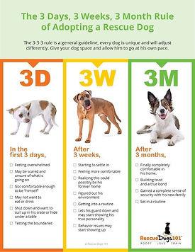 3-3-3-rule-for-adopting-a-new-dog.jpg
