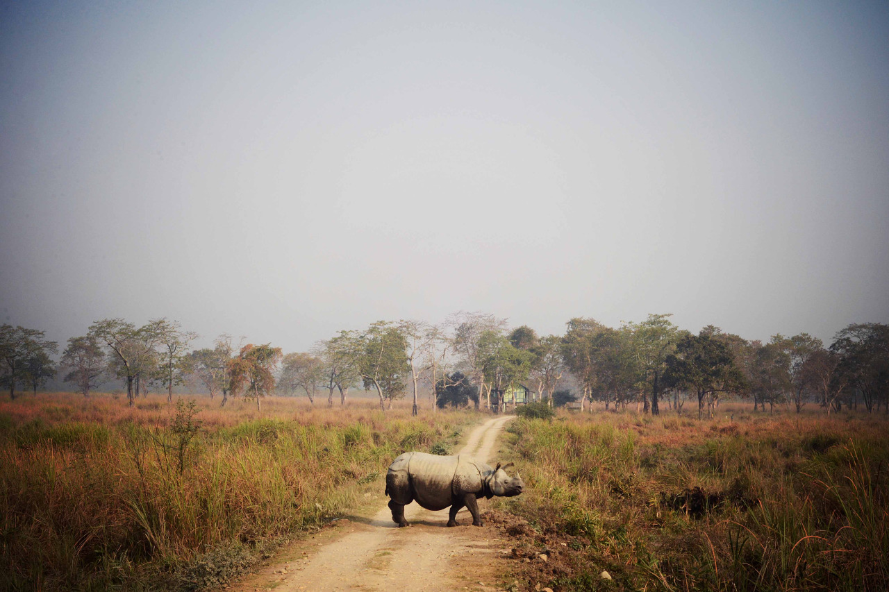 Kaziranga National Park, India