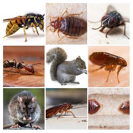 Pest collage.jpg