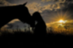horse-2644695.jpg