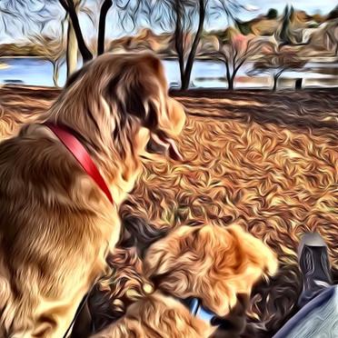 Best Friends of Fall