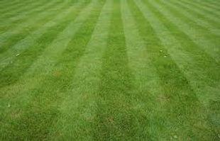 lawn care.jpeg