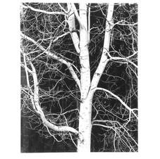 Bob's Birch