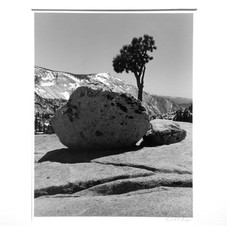 Rock and Tree
