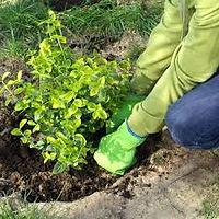 planting.jpeg