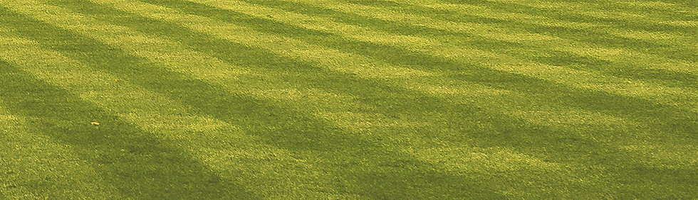 Lawn_edited_edited.png