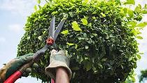 pruning..jpeg