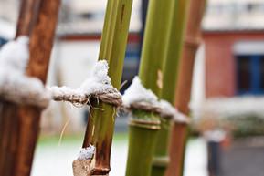 L'hiver à la Mission