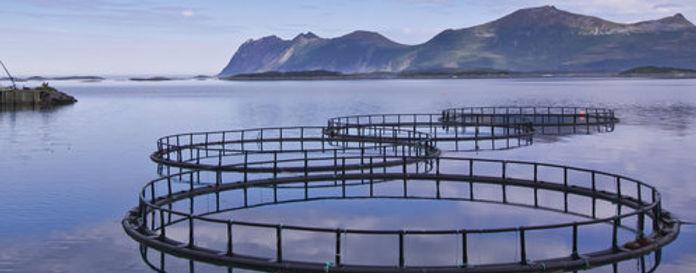fiskeoppdrett.jpg