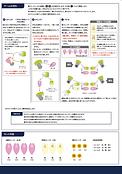 manual1_sakurajp_02.png