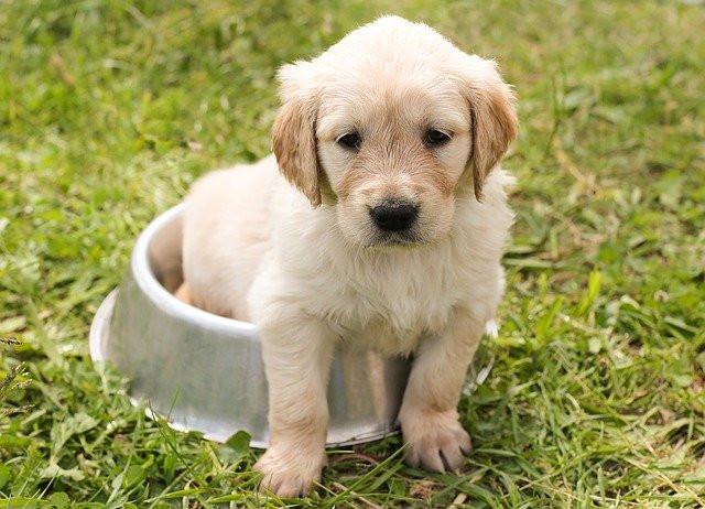 12 fakten über Hunde