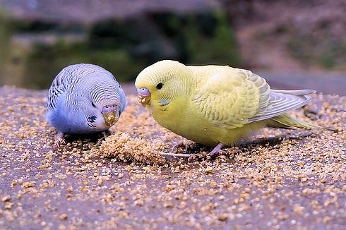 vogelfutter.jpg