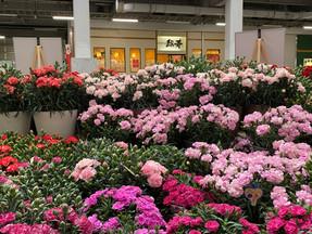 新潟市中央卸売場はお花でいっぱいです!