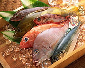 新潟市中央卸売市場直送鮮魚